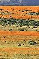 Suráfrica, Namaqualand 06.jpg