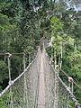 Suspension bridge in forest.jpg