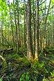 Swamp - Flickr - wackybadger (9).jpg