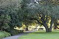 Sydney botanic garden - panoramio - Maksym Kozlenko (1).jpg
