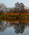 TREES REFLECTIONS in the Moselle. LU.jpg