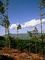 Tagliata - panoramio.jpg