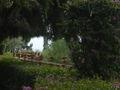 Taormina - Villa Comunale 8 - Gennaio 2006 - Foto di Giovanni Dall'Orto.jpg