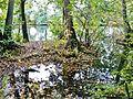 Teich - panoramio (31).jpg