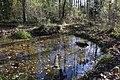 Teich im Schopenhauer Wald Neubiberg-3.jpg