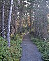 Terra Nova National Park - Newfoundland 2019-08-21 (03).jpg