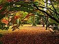 The Acer Glade, Westonbirt Arboretum - geograph.org.uk - 69624.jpg