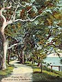 The Bostrom Oaks, Ormond, FL.jpg
