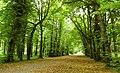 The Castle Gardens , Antrim (1) - geograph.org.uk - 943195.jpg