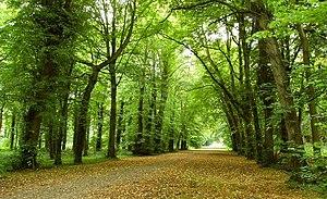 Antrim Castle - Image: The Castle Gardens , Antrim (1) geograph.org.uk 943195