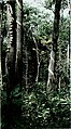 The Conservation Atlas of Tropical Forests- Asia and the Pacific (1991) (20494442118).jpg