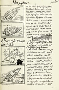 The Florentine Codex- Maize.tif