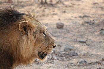 The Lion's Scar.jpg