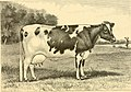 The breeds of live stock, and the principles of heredity (1887) (14594729689).jpg