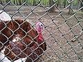 Thompson Park Turkey.jpg