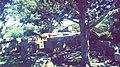 Tifeza forest 02.jpg