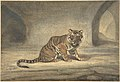 Tiger MET DP805133.jpg
