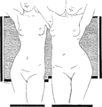 Toleration of the corset1025fig1.png