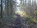 Track through Beacon Hill Wood - geograph.org.uk - 759329.jpg
