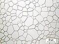 Transparent optical ceramic - Zoom x50 - CILAS.JPG