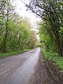 Tree-lined Road, Bushley - geograph.org.uk - 4781.jpg