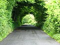 Tree lined road - geograph.org.uk - 852555.jpg