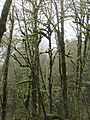 Tryon Creek State Natural Area, trees.JPG
