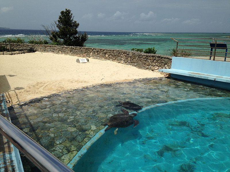 File:Turtle pond and nesting ground in front of Okinawa Churaumi Aquarium.JPG