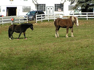 Southeast, New York - Horses at Tilly Foster Farm