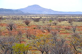 Veld - Typical Veld near Petrified forest in Namibia (2014)
