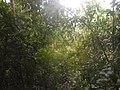 U Kepu tropska prašuma.jpg