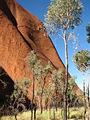 UluruBaseTrees.JPG