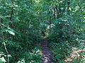 Undergrowth - panoramio.jpg