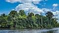 Upper-Suriname river (33496731746).jpg
