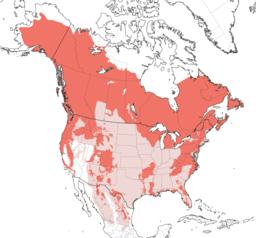 Ursus americanus IUCN range map extant and extirpated