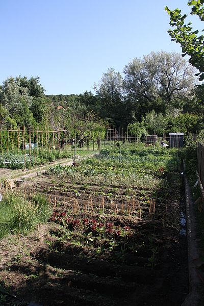 Zeleninová záhradka - umelé spoločenstvo