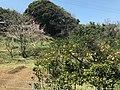 View from bus on Nokonoshima Island 1.jpg