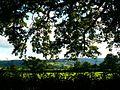 View south from Aldwick Lane, Aldwick, Somerset - geograph.org.uk - 567629.jpg