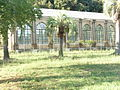 Villa Doria PamphiliGreenhouseComplex1846.JPG