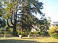 Villa Medicea 114.jpg