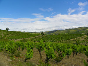 Villeneuve les Corbieres - The vines.jpg