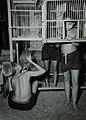Vogelkooien maken - Boys making birdcages (5896773339).jpg