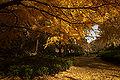 Wakayama Park06n4592.jpg