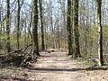 Wald bei Hassloch 03.JPG