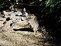 Wallaby&doves.jpg