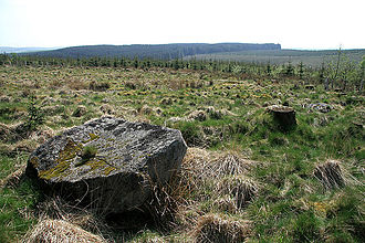 Whitcastles stone circle - Whitcastles Stone Circle situated among the tree stumps of a felled Sitka plantation