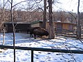 WienIMG 5115 (bizoni).jpg