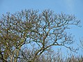 Winter branches at Byron's Pool picnic area - geograph.org.uk - 1136911.jpg