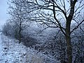 Winter hedgerows - geograph.org.uk - 102729.jpg