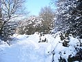 Winter in The Roughs - geograph.org.uk - 1146417.jpg